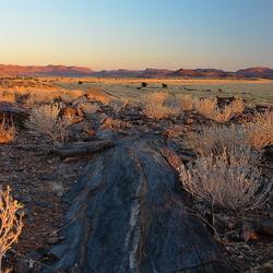 Versteend hout in Namibisch landschap