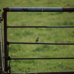 Vogeltje op hek