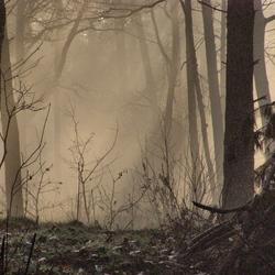 mist in bos trekt op