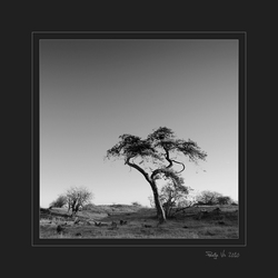 de savanne 5