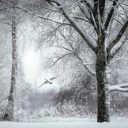 Winter 2017-2018 copy
