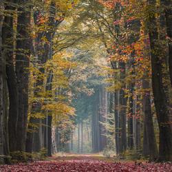 herfst kleuren op landgoed de velhorst