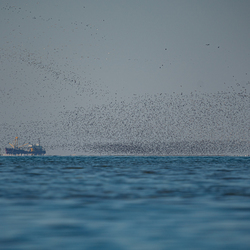 Vogels op zee