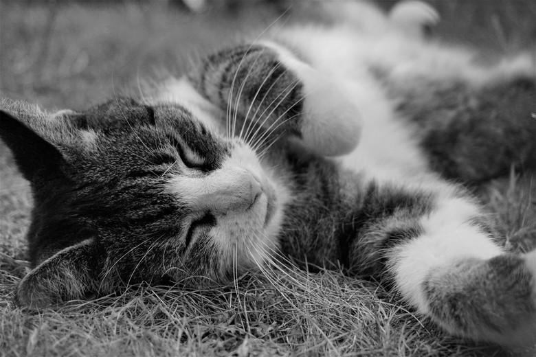 Noa - Mijn nieuwe camera uitproberen, samen met mijn modelletje, mijn kat: Noa.