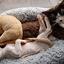 Devon rex kittens relax