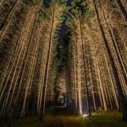 (ver)licht in de duisternis