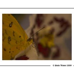 Close up Vlinder.