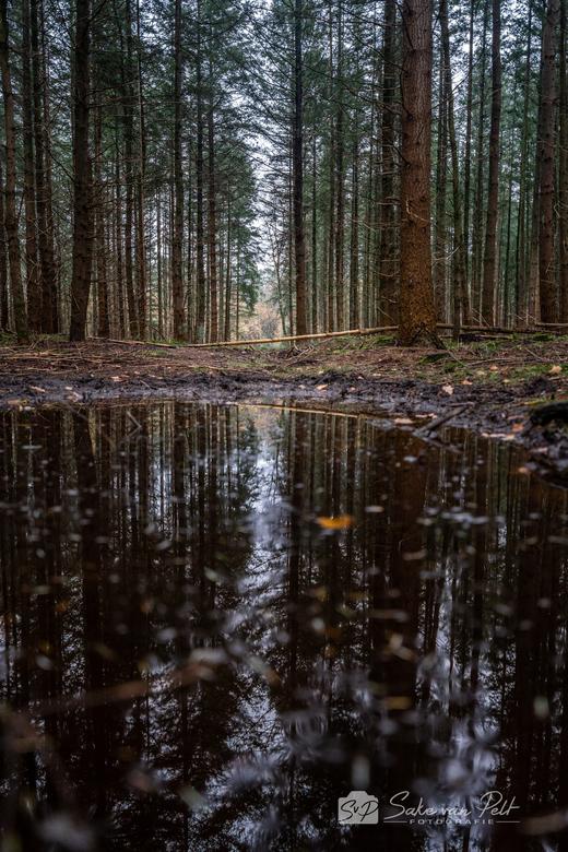 Herfstreflecties 3 - Deel drie van de reflecties. Deze foto heb ik gemaakt tijdens een wandeling door het Speulderbos. Het is wel lastig om zo laag te
