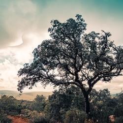 Magic tree HDR Magisch bos