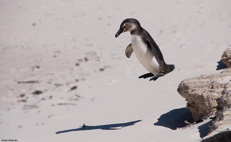 jump! - pinguinhumor.......