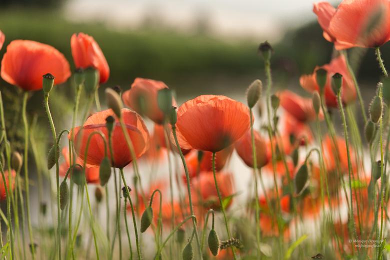 Een bloemetjesgordijn -