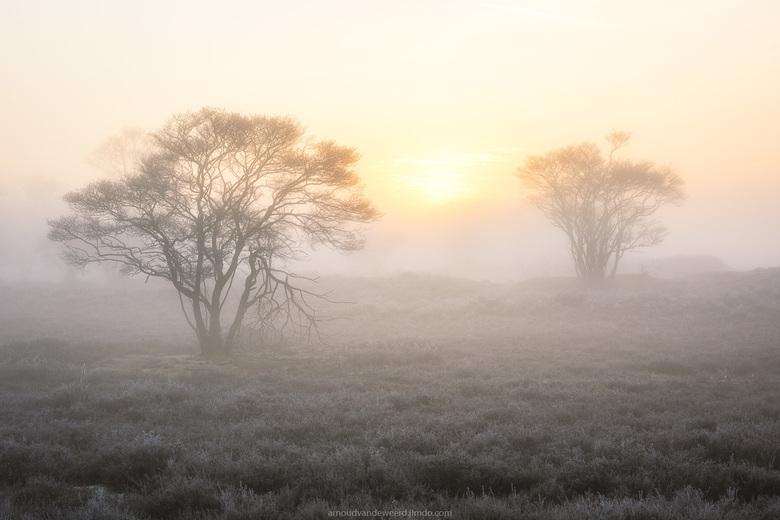 Peaceful morning - Prachtige omstandigheden op de Zuiderheide in Hilversum. Genieten wanneer alles mooi samenvalt. Mocht je het nog niet gelezen hebbe