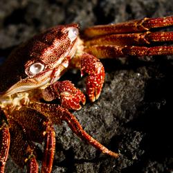 Zonnend krabbetje