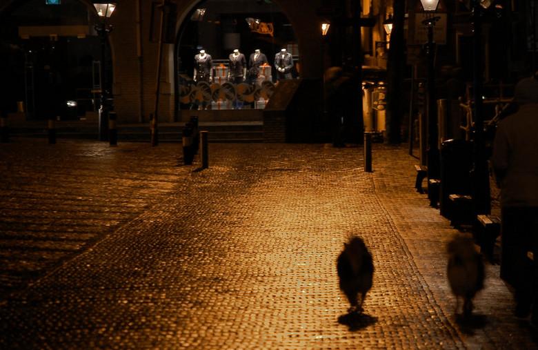 waagplein - in de historische binnenstad, op de kaasmarkt, glanzen de natgeregende keitjes 's avonds in het licht van de lantaarnpalen terwijl de