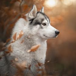 Finn in het bos