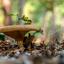 op zoek naar paddenstoelen