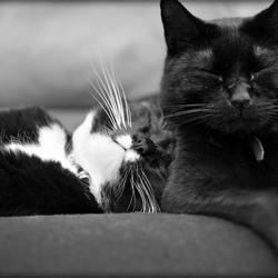 Bankhangen voor katten