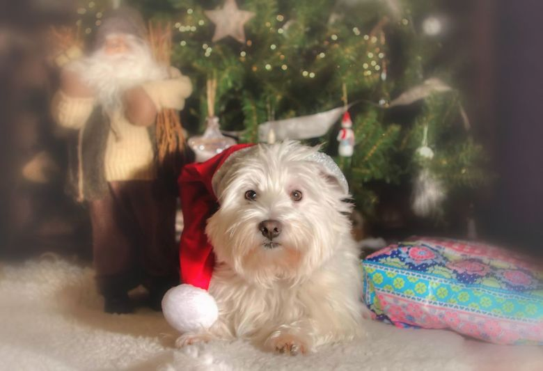 iedereen een prettig kerstfeest