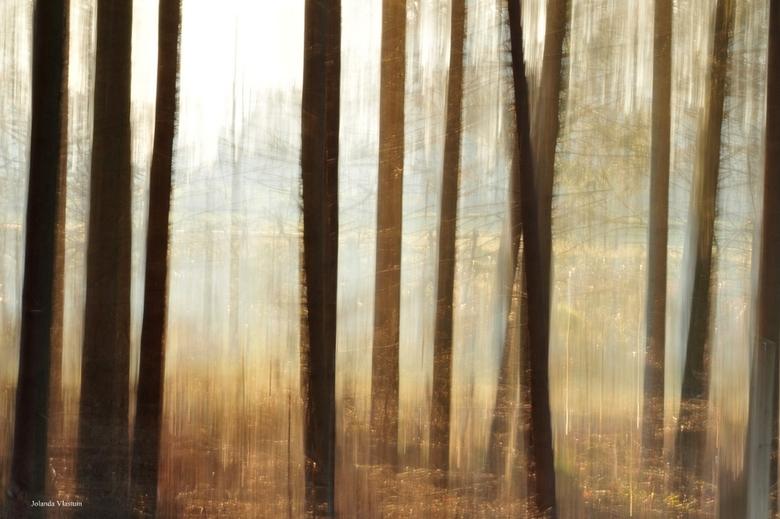 Abstracte bomen -