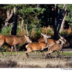 Oh my Deer !