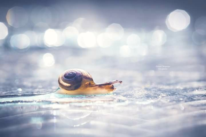 Going slow -