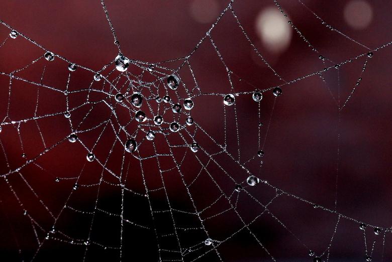 Parels in een spinneweb - Mist, vocht en kou gaven in de ochtend een prachtig schouwspel.