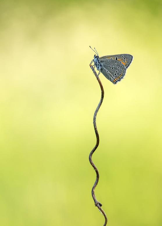 A bumpy road - Het gaat niet goed met vlinderstand in Nederland, slechts 29 soorten (38 procent) zijn niet bedreigd. Andere soorten zijn ernstig bedre
