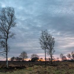 Berken bij zonsondergang