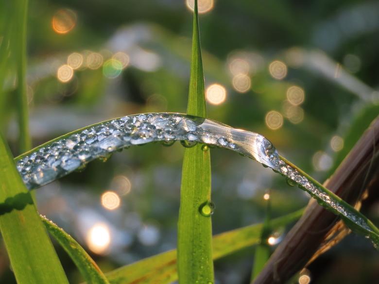 Druppels op grasspriet  - De zon laat de druppels mooi schitteren