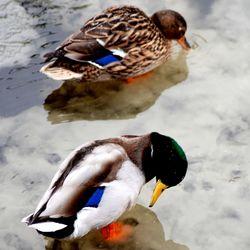 Donald & Katrien