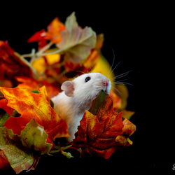 herfst portret