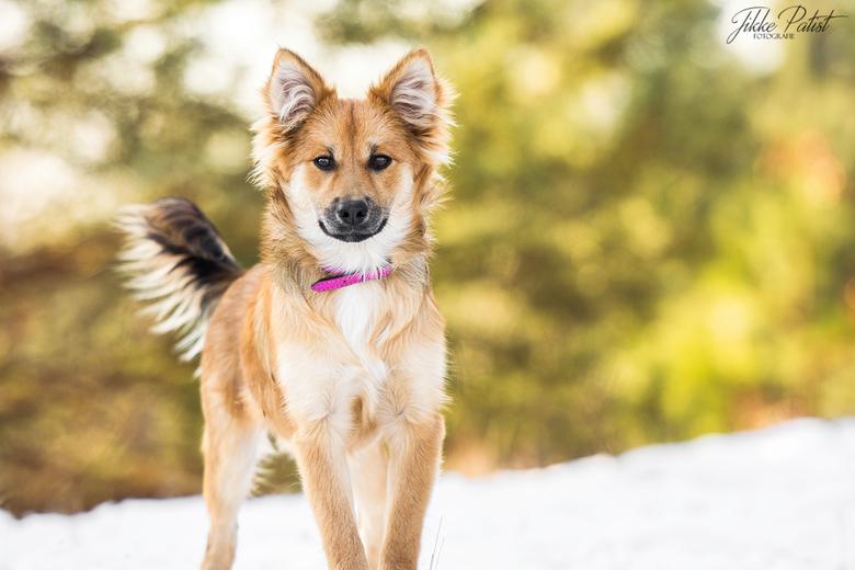 Feeling at Home - Deze IJslandse hond voelde zich helemaal thuis in de sneeuw én voor de camera!