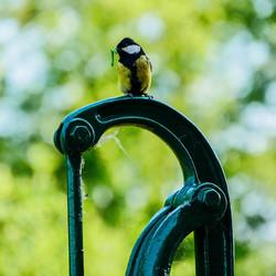 Wildlife in eigen tuin
