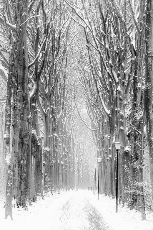 Winter Lane - Winter Lane