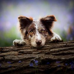 Hond met prachtige bloemen