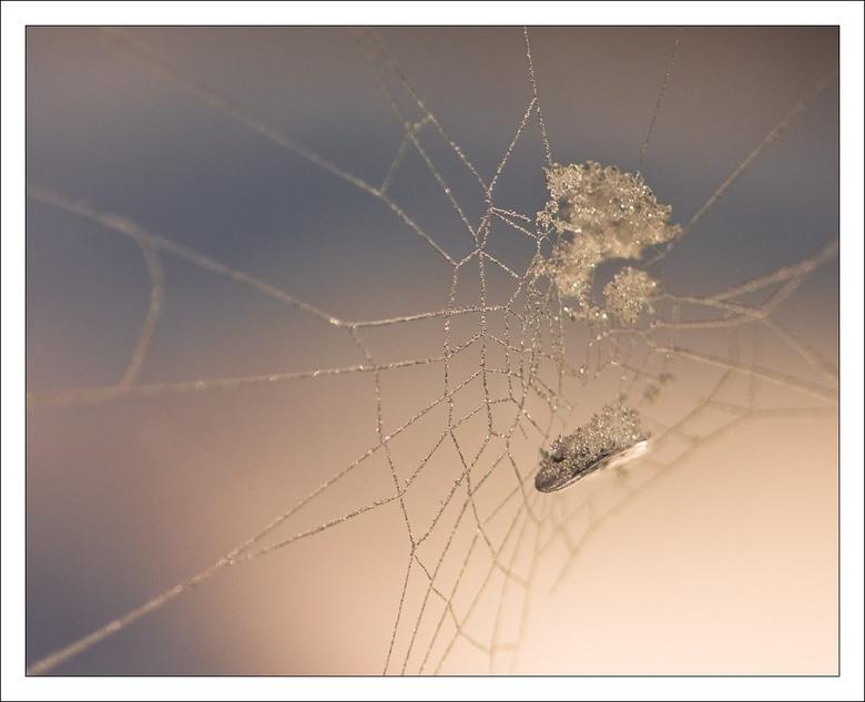 ijsweb 1 - Met de nieuwe macrolens een web waar ijs in zat met zon erop gefotografeerd. Hij zat in een moeilijke hoek. Statief gebruikt. Moeilijk nog