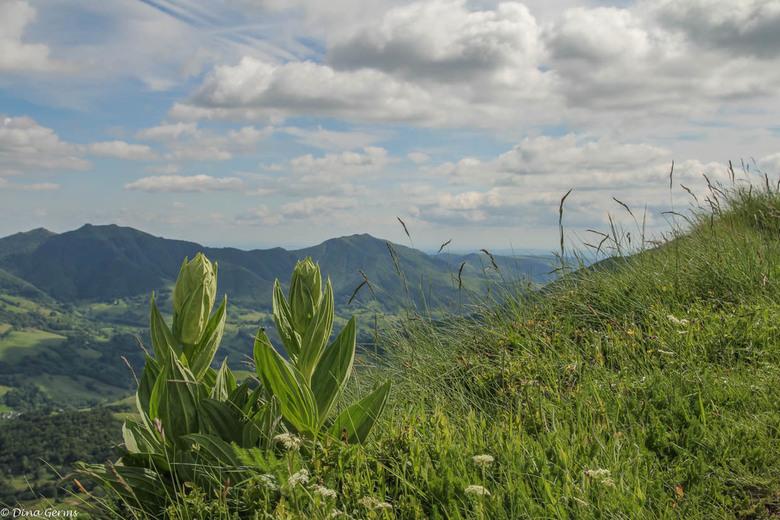 Cantal-Frankrijk - Bedankt voor het kijken en jullie reacties op mijn vorige upload.<br /> Eerlijke reacties, opmerkingen en tips worden gewaardeerd.