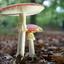 Op een mooie paddenstoel.........