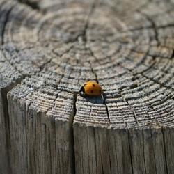Lopen op het oneindige pad van jaarringen