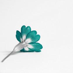 Project bloem 5