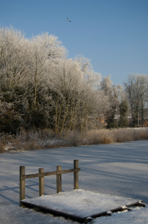 Winter 2009 - Op een plasje in een park in Breda
