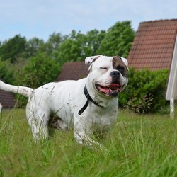 lachende hond