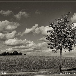 the lonely tree and the cotton wool clouds