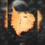 Laatste stukje herfst