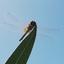 Zomaar een Libelle