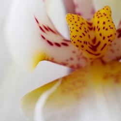Orchidee (01)
