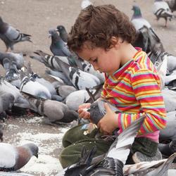 Jongen voert duif