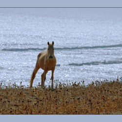 Paard aan Zee