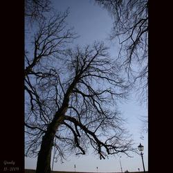 Bomen Wijk bij Duurstede