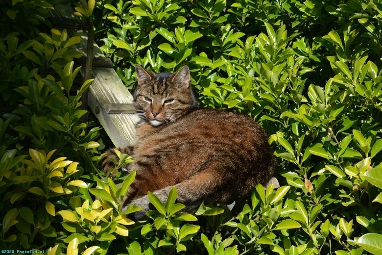 Neelix de kat. - Neelix de kater aan het rusten bij de trap naar zijn Neelix-Tower.